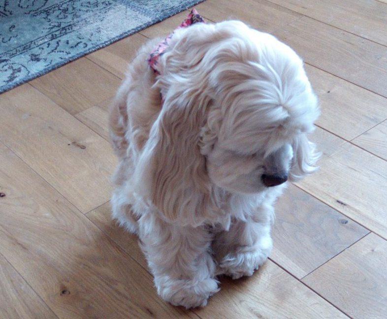 犬 の 耳 掃除